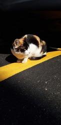 Cat road aspalt cute darkbrown