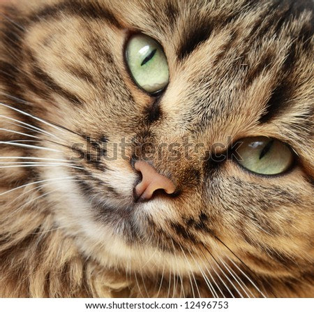 Cat`s close-up