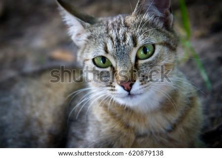 Cat's eyes #620879138