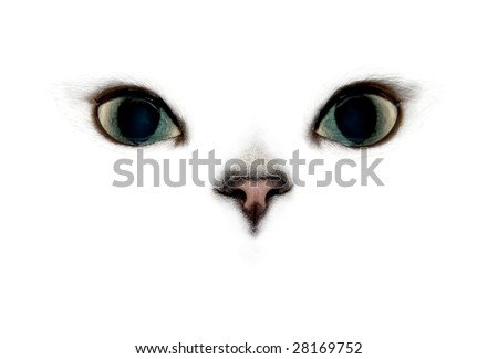 Cat's eyes and nose on white background.