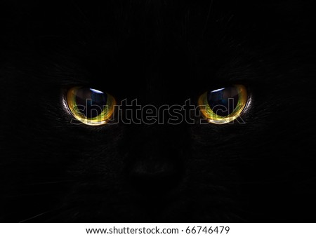 cat's eyes glowing in the dark