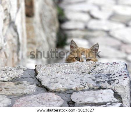 Cat's eyes on the stone footpath- MORE SIMILAR AVAILABLE, PLEASE LOOK IN MY PORTFOLIO