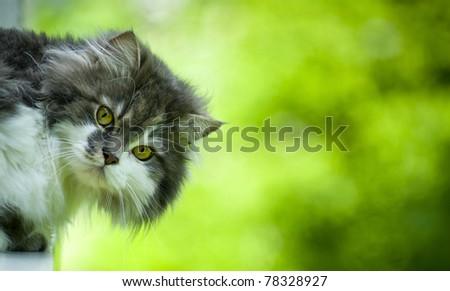 Cat\'s head - looking at camera.