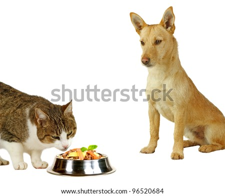 Cat´s only, a cat is eating a delicious meal  while a dog is only looking