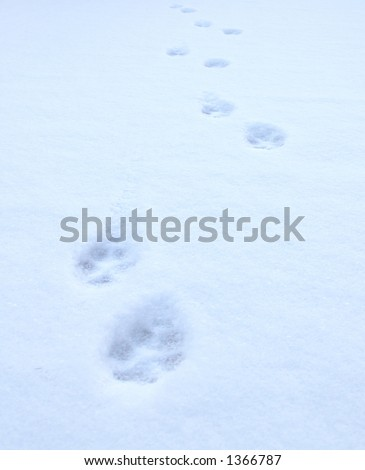 cat's paw prints on snow, from foreground to horizon