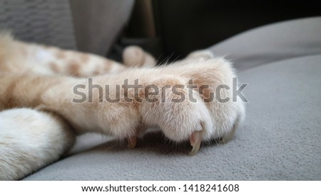 cat's paw with long and sharp claws on sofa.   #1418241608