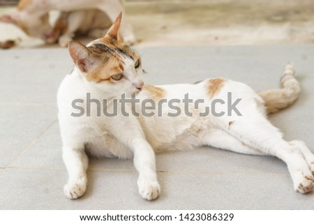 Cat (scientific name: Felis catus) is a mammal. The body is about 40 cm long, has a small body, long body size, short legs, is a carnivore. There are sharp teeth and sharp nails.