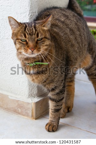 cat scratching by a wall