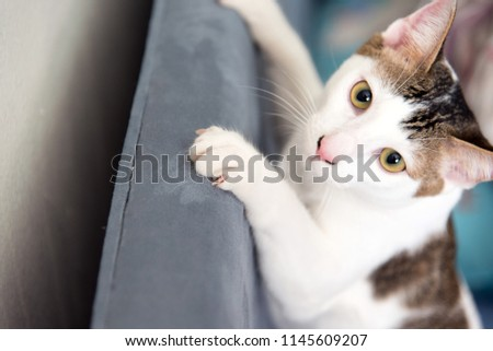 Cat Scratching.Claws on the scratching Furniture #1145609207