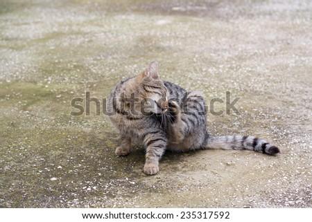 Cat scratching its head.