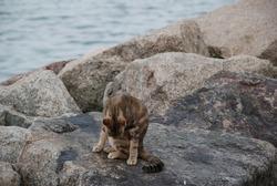 cat scratching itself on rocks near ocean