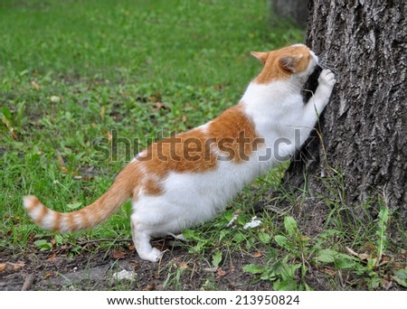 cat scratching nails on tree