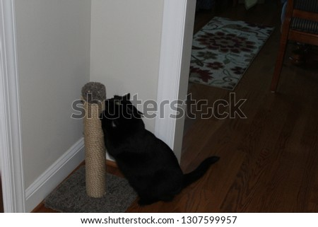 Cat scratching post #1307599957