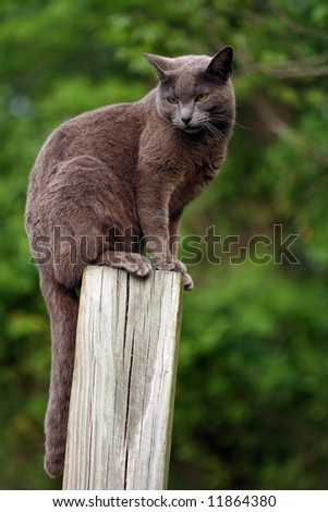 Cat setting on a post
