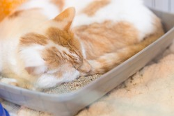 Cat shelter animal pet rescue adoption unwanted lost homeless kitty sad lonely sleep ginger