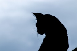 Cat silhouette shape, sit and looking back close up image against gloomy dark skies.