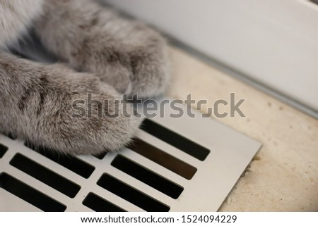 cat siting on a heating radiator. heating season. low temperature at building on winter time.