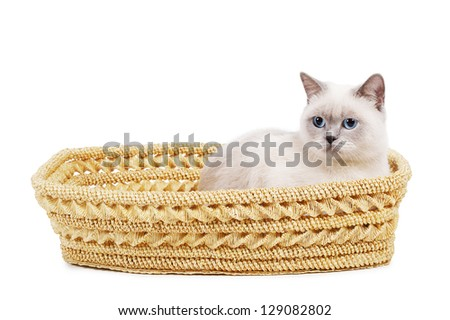 cat sits in basket - stock photo