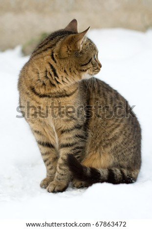 cat sits in the snow