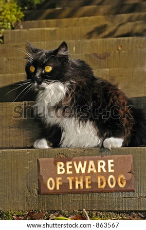 """Cat sits over """"Beware of the Dog"""" sign"""