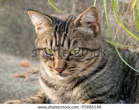 Cat sitting - stock photo