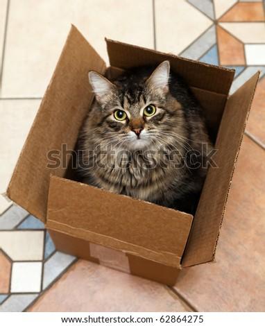 Stock Photo Cat sitting in a cardboard box