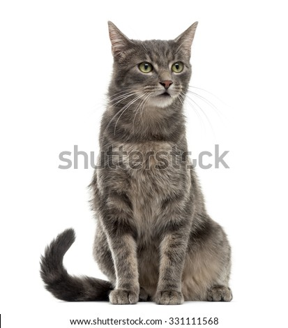 Shutterstock Cat sitting in front of a white background