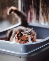 Cat sitting in his litter box and keeping an eye on something.