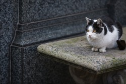 Cat sitting next to tombstone at cemetery