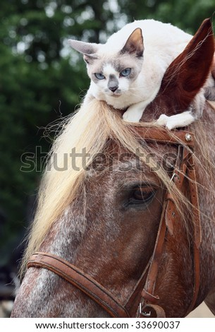 Cat sitting on a head at a horse.