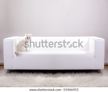 Cat sitting on a white leather sofa - stock photo