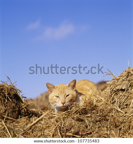 Cat sitting on hay