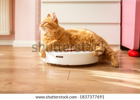 Cat sitting on robotic vacuum cleaner. White vacuum cleaner is working on the floor with calm pet sleeping on it. Clean floor.