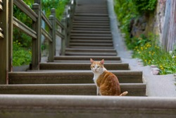 Cat sitting on stairs