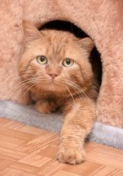 cat sitting on the cat's plush house