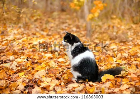 Cat sitting on the leaves