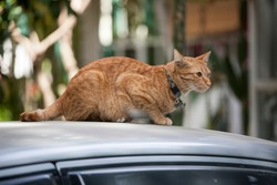 cat sitting on the roof of a car