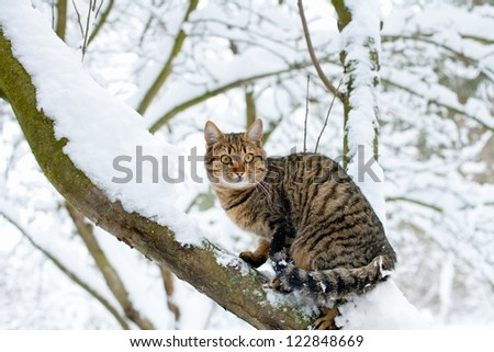Cat sitting on the snowy tree
