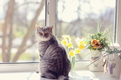 cat sitting on the windowsill in the flowers on the background of the window