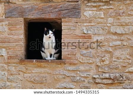 cat sitting on the windowsill of a small window