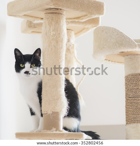 Cat sitting on top of the scratching post