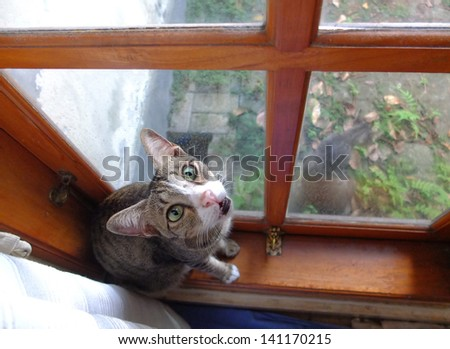 Cat sitting on windowsill at home.