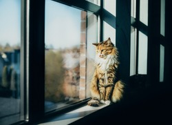 Cat sitting on windowsill, early mornings. Cute striped female kitty watching birds through window. Heavy shadows with defocused cat reflection and residential neighborhood. Selective focus.