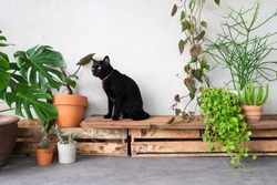Cat sitting on wooden shelf with plant at home