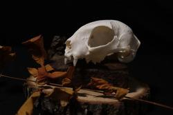 Cat skull aesthetic dark art!