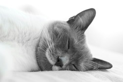 cat sleeping and pet