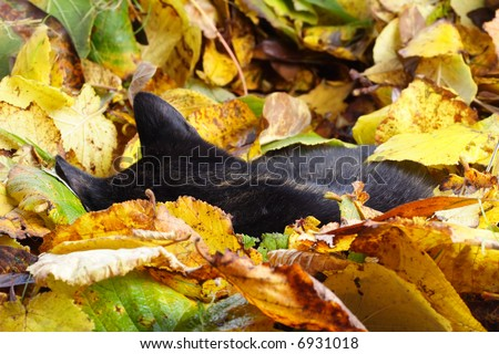 cat sleeping between autumn leaves