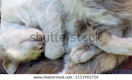 Cat. Sleeping cat. Photo of a gray cat. Blurry cat photo