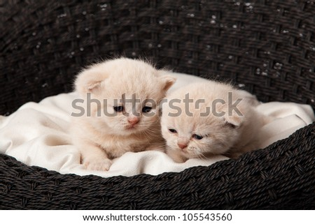 Cat sleeping in the basket