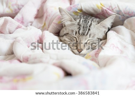 cat sleeping in the pink floral blanket, selective focus #386583841